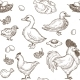 Chicken and Ducks Vector Sketch Pattern Background - GraphicRiver Item for Sale