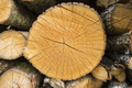 Tree trunks cut and stacked for selling. - PhotoDune Item for Sale