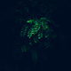 Green branch in a mysterious lighting. - PhotoDune Item for Sale