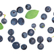 Foraged bilberries and blueberries, top, paths - PhotoDune Item for Sale