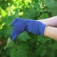 Caucasian Female in Apron Putting on Blue Gardening Gloves - VideoHive Item for Sale