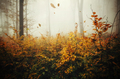 Leaves falling in autumn forest with fog - PhotoDune Item for Sale