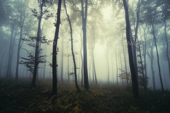 Surreal dark Transylvanian forest on Halloween - Stock Photo - Images