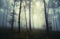 Surreal dark Transylvanian forest on Halloween - PhotoDune Item for Sale