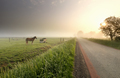 horse on pasure at misty sunrise - PhotoDune Item for Sale