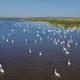 white swans in Danube Delta, Romania - PhotoDune Item for Sale