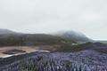 Typical Iceland landscape - PhotoDune Item for Sale