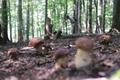 Man collect mushrooms - PhotoDune Item for Sale