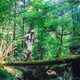 Alone man in wild forest - PhotoDune Item for Sale