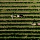 Aerial View of a Tractor Harvesting Grapes in a Vineyard. Farmer Spraying Grape Vines with Tractor - VideoHive Item for Sale