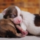 Newborn Puppies Are Pressed Against Each Other - VideoHive Item for Sale