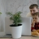 Two Boys and Father Watching Film on the Laptop in the Modern Kitchen - VideoHive Item for Sale