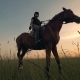 Rider with a Whip on a Horse, Bottom View - VideoHive Item for Sale