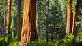 Scenic road in Sequoia National Park, California, USA. - PhotoDune Item for Sale