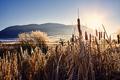 Golden frosty sunrise, Wyoming, USA. - PhotoDune Item for Sale