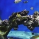 Tropical Fish Swim in the Ocean or Sea - VideoHive Item for Sale