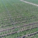 A View of the Seedlings of Trees From the Air - VideoHive Item for Sale