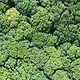 Flight over Forest - VideoHive Item for Sale