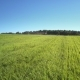Boundless Sky Over Forest Among Green Field Landscape - VideoHive Item for Sale