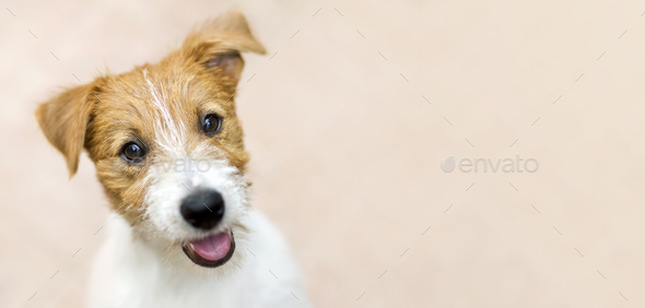 Banner of a happy smiling puppy pet dog  - Stock Photo - Images