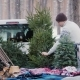 A Young Man Is Shipping a New Year Tree in the Back of a Pickup Truck - VideoHive Item for Sale