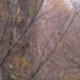 Snowfall in Autumn Against Faded Trees - VideoHive Item for Sale
