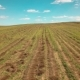 Drone Flies Over the Field - VideoHive Item for Sale