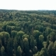 Drone Flies Above the Forest - VideoHive Item for Sale