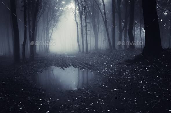Dark haunted lake in forest - Stock Photo - Images