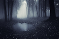 Dark haunted lake in forest - PhotoDune Item for Sale