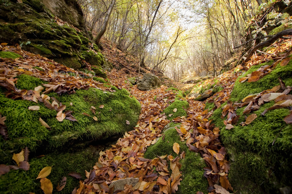 Fallen leaves in autumn valley - Stock Photo - Images