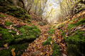 Fallen leaves in autumn valley - PhotoDune Item for Sale