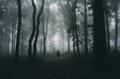 Man in mysterious dark Transylvanian woods - PhotoDune Item for Sale