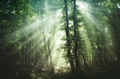 Magical sun rays in the woods - PhotoDune Item for Sale