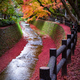 Maple tree along the canal in Kitano Tenmangu garden, Kyoto, Japan - PhotoDune Item for Sale