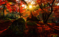 Silhouette of autumn leaf with sun flare in Eikando temple, Kyoto, Japan - PhotoDune Item for Sale