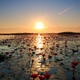 The sea of red lotus, Lake Nong Harn, Udon Thani, Thailand - PhotoDune Item for Sale
