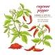 Cayenne Pepper Set