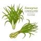 Lemongrass Vector Set