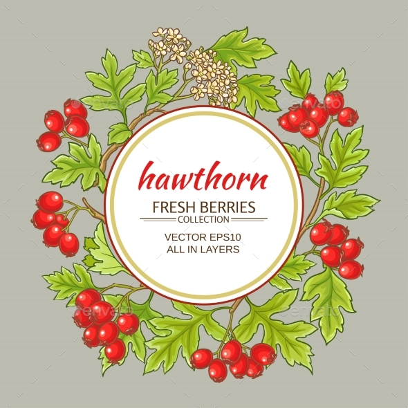 Hawthorn Vector Frame - Food Objects