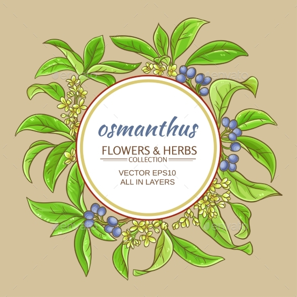 Osmanthus Vector Frame - Flowers & Plants Nature