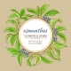 Osmanthus Vector Frame - GraphicRiver Item for Sale