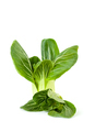 Fresh Chinese cabbage (Pak-choi) on a clean white background. Is - PhotoDune Item for Sale