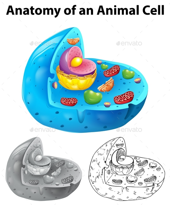 Anatomy Of Animal Cell In Three Different Drawing Styles By