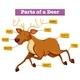 Diagram Showing Parts Of Deer