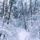 Snowy Branches in Forest - VideoHive Item for Sale