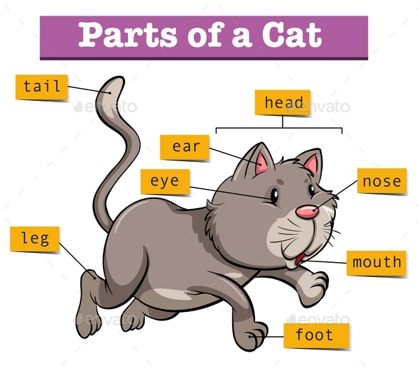 Diagram Parts Of A Cats Ear Auto Electrical Wiring Diagram