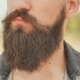 Beard of a Man - VideoHive Item for Sale