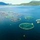 Aerial Footage Farm Salmon Fishing in Norway - VideoHive Item for Sale