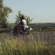 The View From a Field Full of Grass and Field Weeds All You See Is a Couple Riding Their Motorbike - VideoHive Item for Sale
